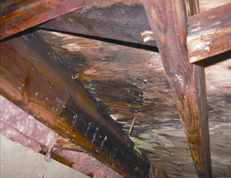 mold and rot in a San Francisco crawl space