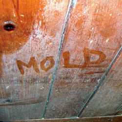 Wood in Concord that's showing signs of cosmetically damaging mold